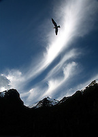 Bird through the mountains of Lake Huapi.