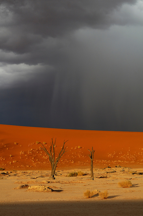Storm over Dead Vlei, Sand Dunes, Sossusvlei area, Namib Naukluft National Park, Hardap Region, Namibia..
