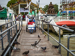 October 2, 2018 - Bangkok, Bangkok, Thailand - A vender pushes his cart past a flock of pigeons at Wat Rakhang in Bangkok. Authorities in the Thai capital have banned the feeding of wild pigeons. They are trying the get the pigeon population under control. They've imposed a fine of up to 25,000 Baht (about $770US) and/or up to three months in jail for feeding pigeons. Government officials have ordered that signs be put up to warn people of the dangers and disease risk of pigeons. (Credit Image: © Sean Edison/ZUMA Wire)