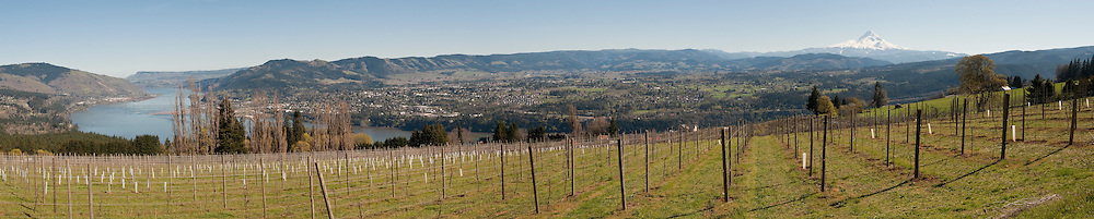 Celio vineyards overlooking Mt. Hood and Columbia River Gorge, White Salmon, Washington