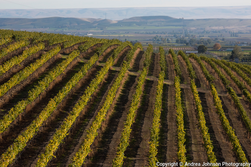 Dubrul Vineyard, Yakima, Washington