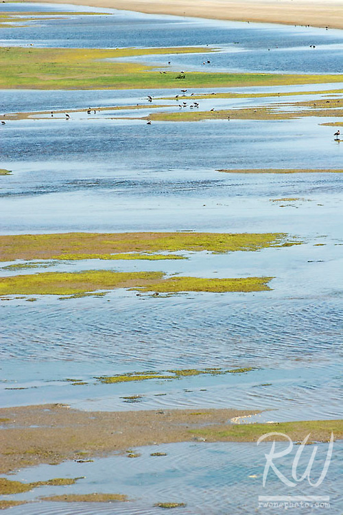Tidal Marsh at Low Tide, Bolsa Chica Wetlands Ecological Reserve, California