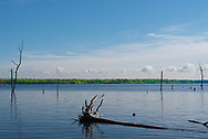 An uprooted tree lies fallen in the blue water of the  Manasquan Reservoir