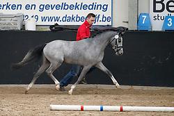 001, Tsigan van de Nieuwe Heide<br /> Hengstenkeuring BRP<br /> 3de phase - Hulsterlo - Meerdonk 2018<br /> © Hippo Foto - Dirk Caremans