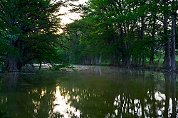 Stock photo of Cypress trees along the banks of the Frio River in the Texas Hill Country