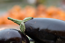 detail of eggplants outdoors