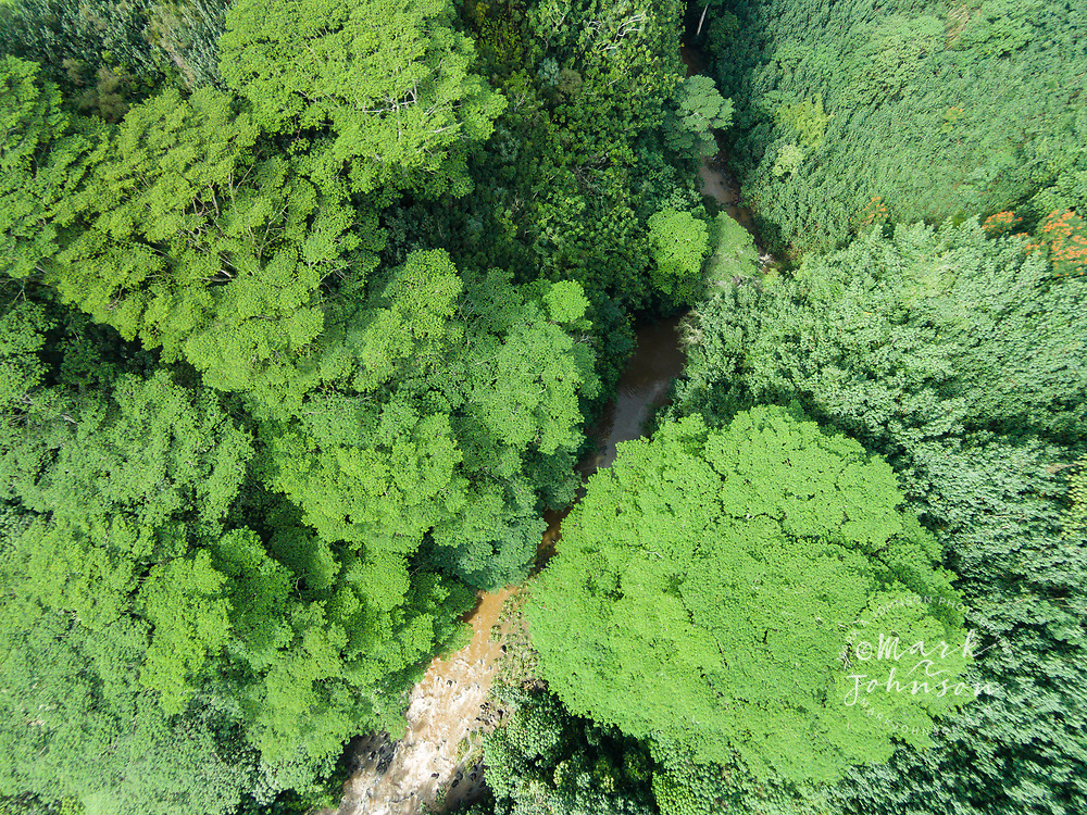 Aerial photograph looking straight down at the North Fork of the Wailua River, Kauai, Hawaii