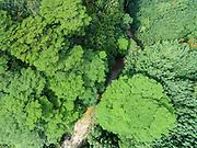 Aerial photograph looking straight down at the North Fork of the Wailua River, Kauai, Hawaii