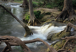 Stock photo of water rushing over rocks and cypress tree roots in a river in the Texas Hill Country