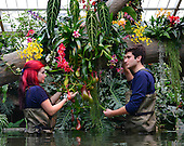 2014_02_06_Kew_Orchids_SSI