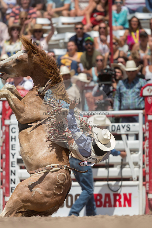 Bareback rider Winn Ratliff hangs on to Jamboree as the horse falls backwards at the Cheyenne Frontier Days rodeo at Frontier Park Arena July 24, 2015 in Cheyenne, Wyoming. Frontier Days celebrates the cowboy traditions of the west with a rodeo, parade and fair.