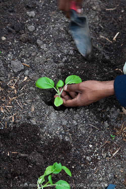 A gardener transplants seedlings in a roodtop garden.