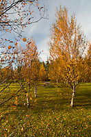 A bench inbetween trees in autumn