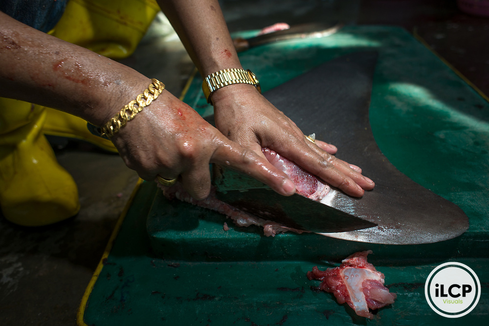 A shark fin trader trims cartilage from a pectoral fin of a bull shark, Carcharhinus leucas, caught from the Andaman Sea in a shark processing factory in Ranong, Thailand.