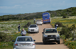 Cape Town - 180814 - Tourists and local nature enthusiasts flok to the West Coast National Park as this years annual flower season starts. The official Flower Season opens on 1 August and closes on 30 September, allowing visitors to the park access to the prolific Postberg section, which is closed to the public throughout the rest of the year. Picture: Armand Hough / African News Agency (ANA)