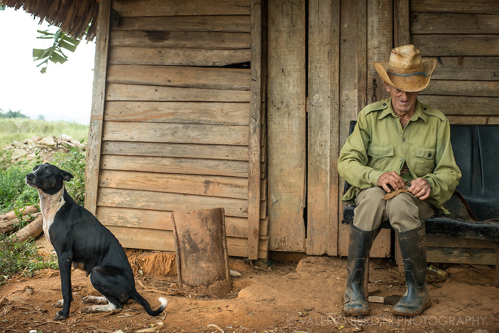 A farmer, with his dog, takes a break from working in the field. He hand makes a small cigar 'cigarillo' with a few leaves from his own plantation. Vinales valley, Cuba.
