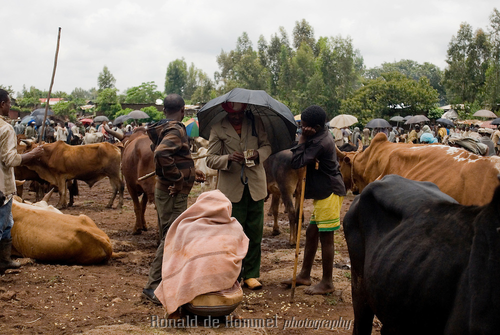 Marché aux bestiaux de Bahar Dar.