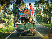 09 OCTOBER 2016 - JEMBRANA, BALI, INDONESIA:  A makepung team (buffalo racing) takes a truck to the track in Tuwed, Jembrana, Bali. Makepung is buffalo racing in the district of Jembrana, on the west end of Bali. The Makepung season starts in July and ends in November. A man sitting in a small cart drives a pair of buffalo bulls around a track cut through rice fields in the district. It's a popular local past time that draws spectators from across western Bali.    PHOTO BY JACK KURTZ