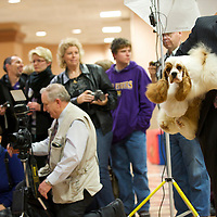 A dog and owner motion towards the studio lighting set-up to have their portrait taken during the ASC Flushing Spaniel Show at the Valley Forge Convention Center in King of Prussia, Pennsylvania, USA.  The annual contest is among the largest dog shows in the country and all important for spaniels, honouring the finest dog within the 12 breeds, the coveted best in show award.