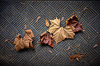 Autumn leaves. Image taken with a Leica T camera and 23 mm f/2 lens (ISO 100, 23 mm, f/2, 1/40 sec)