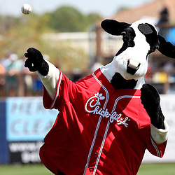 March 15, 2011; Port Charlotte, FL, USA; The Chick-fil-a cow throws the first pitch before a spring training exhibition game against the Florida Marlins at Charlotte Sports Park.   Mandatory Credit: Derick E. Hingle