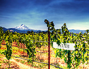 Mt Hood Winery Syrah