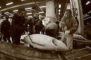 Mar 4, 2006; Tokyo, JPN; Tsukiji.With a little help, a buyer loads his recently purchased frozen tuna on to a cart at the Tsukiji Fish Market...After tuna is caught, it is flash frozen at sea to keep it fresh until it is brought to the market to be sold...Photo credit: Darrell Miho