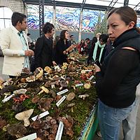TOLUCA, México.- (Agosto 31, 2017).- El Jardín Botánico Cosmovitral albergo la XXVIII Exposición de Hongos y XIV Exposición de Biodiversidad en donde se muestra la diversidad de hongos que existen en el Estado de México y sus usos. Agencia MVT / Crisanta Espinosa.