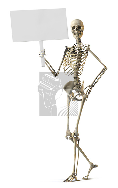 A skeleton standing casually and holding a sign on a white background