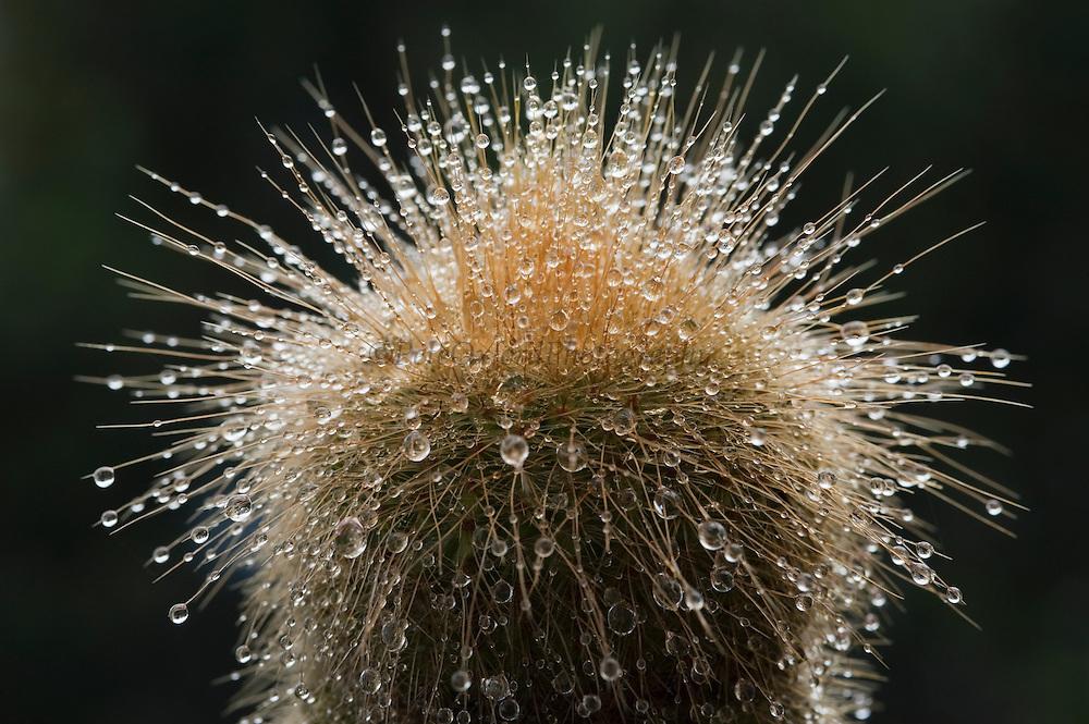 Cactus with mist