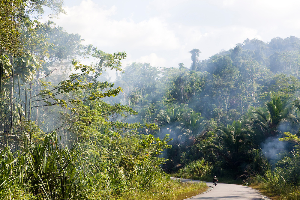 Smoke from a small fire drifts over the Trans Papuan Highway in Indonesia, Sept. 4, 2008..Daniel Beltra/Greenpeace