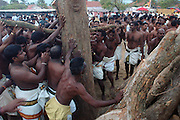Sri Lanka. Udappuwa festival...Once the first flames have risen, the men of the village pile on the heavy trunks of Tamarind wood to make a huge bonfire.