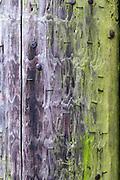 Telegraph Pole notice board
