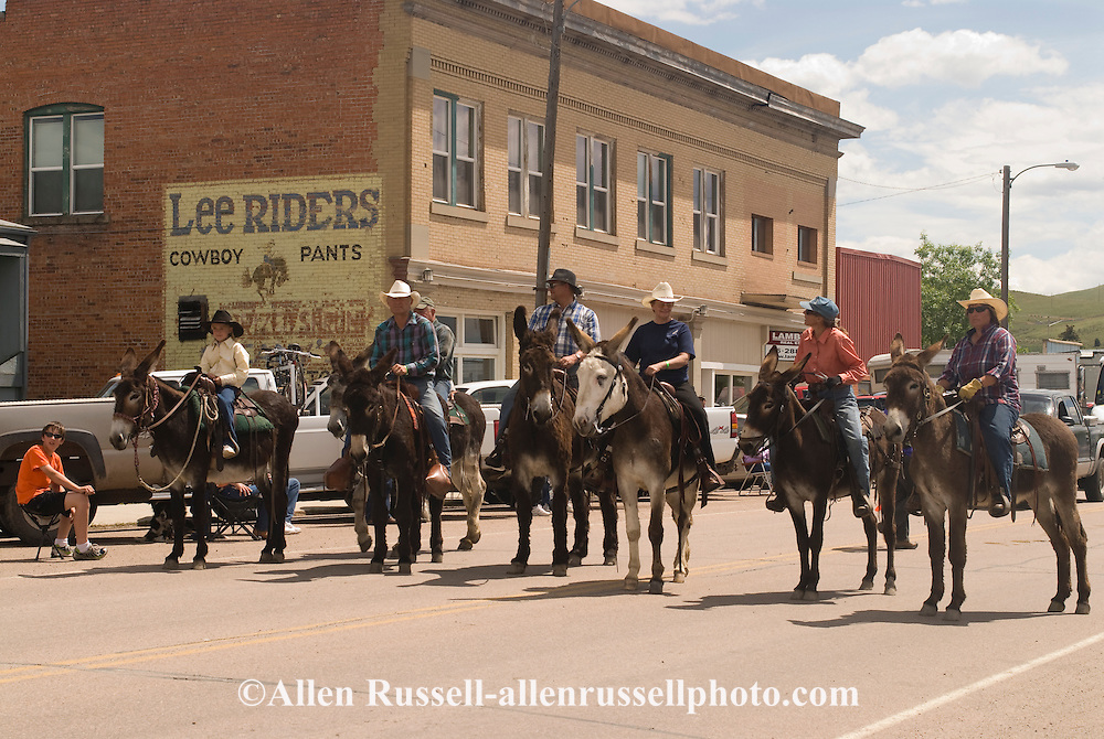 Donkeys (Equus asinus) in the Montana Mule Days parade in Drummond Montana