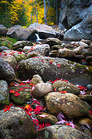 Red Maple leaves litter the streambed of the Bear River in Grafton Notch State Park, near Newry, Maine.