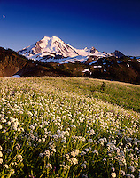 Mount Baker from wildflower meadows of Skyline Divide, Mount Baker Wilderness Washington