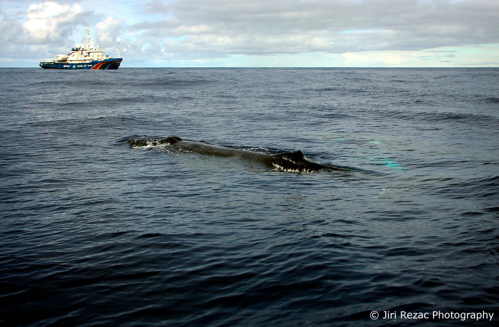 SOUTHERN OCEAN ESPERANZA 2JAN08 - Humpback whale near the Greenpeace ship MY Esperanza in the Southern Ocean...jre/Photo by Jiri Rezac..© Jiri Rezac 2008..Contact: +44 (0) 7050 110 417.Mobile:  +44 (0) 7801 337 683.Office:  +44 (0) 20 8968 9635..Email:   jiri@jirirezac.com.Web:    www.jirirezac.com..© All images Jiri Rezac 2008 - All rights reserved.