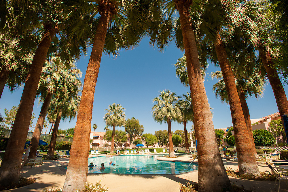 Swimming pool surrounded by palm trees in Palm Springs, California