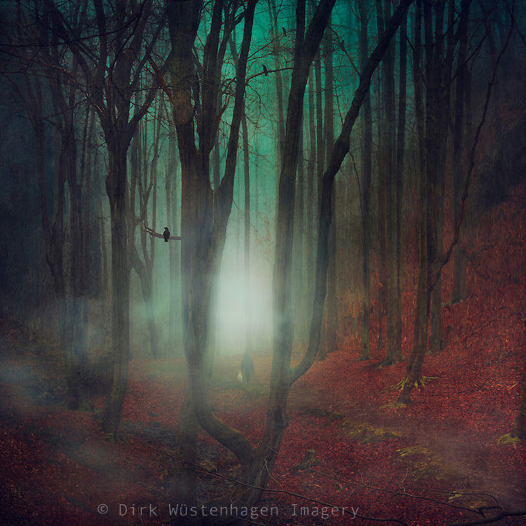Mysterious forest in fog scenery<br />