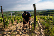 Stapleton-Springer winery, Southern Moravia, Czech Republic