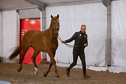 Van der Meer Patrick, NED, First Apple<br /> Jumping Mechelen 2017<br /> © Sharon Vandeput<br /> 26/12/17