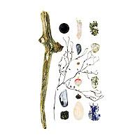 Driftwood, plastic bottle cap, Knotted Wrack (Ascophyllum nodosum), Blue Mussel (Mytilus edulis), asphalt, birch bark (Betula payrifera), Common Periwinkle (Littorina littorea), fishing bobber, acorn cap (Quercus sp.), Soft-shell Clam (Mya arenaria), lichen, granite beach stone, cigarette package fragment