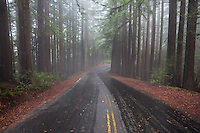 Road Through Foggy Redwood Forest, Mount Tamalpais State Park, California