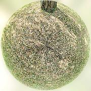 Grass tiny planet