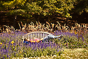 A man rests in Lincoln Park amount the flowers Chicago skyline.