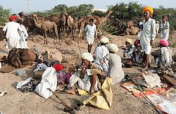 "© Licensed to London News Pictures. 21/11/2012. Pushkar, India. Groups of Indian camel traders with their camels at the Pushkar Camel Fair in Rajasthan, India. The Pushkar Fair, or Pushkar ka Mela, is the annual five-day camel and livestock fair, held in the town of Pushkar in the state of Rajasthan, India. It is one of the world's largest camel fairs, and apart from buying and selling of livestock it has become an important tourist attraction and its highlights have become competitions such as the ""matka phod"", ""longest moustache"", and ""bridal competition"".  Photo credit : Richard Isaac/LNP"