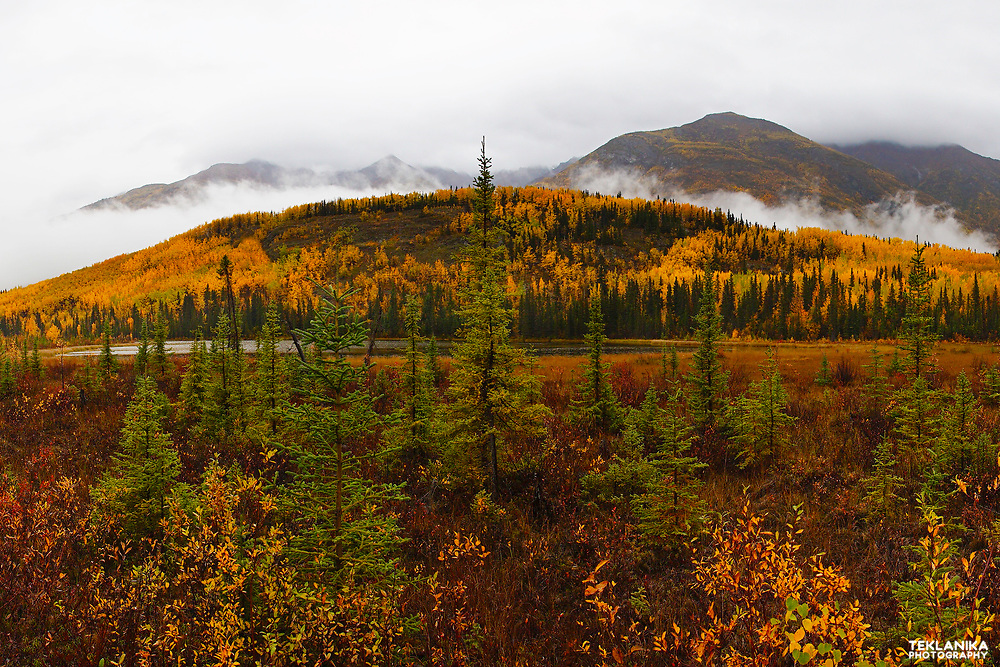 Autumn in America's largest National Park, Wrangell - St. Elias.