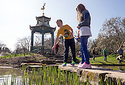 © Licensed to London News Pictures. 07/04/2015. Maidenhead, UK. People feed the fish from then stepping stones at the water garden. People enjoy the warm and sunny weather at Cliveden House in Maidenhead Buckinghamshire today 7th April 2015. Photo credit : Stephen Simpson/LNP