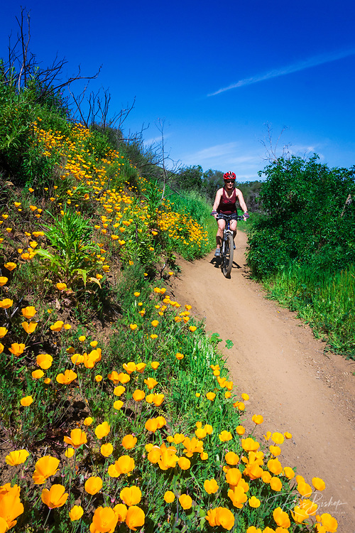 Mountain biking in Sycamore Canyon, Point Mugu State Park, Malibu, California USA