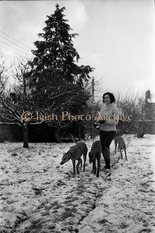 27/12/1962<br /> 12/27/1962<br /> 27 December 1962<br /> Orla N&iacute; Sh&iacute;ochain, Dublin Model working in Paris home for Christmas at Rathfarnham Park, Dublin with two of her parent's greyhounds.